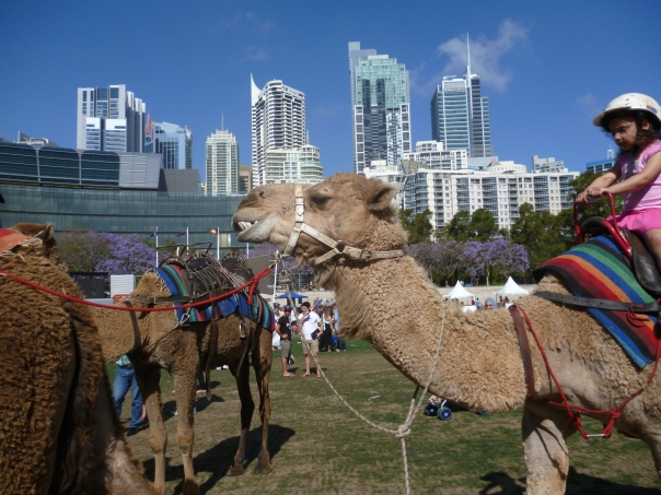 Camels at Darling Harbour
